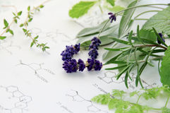 Herbs and science Royalty Free Stock Images