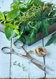 Herbs and scissors. Stock Image