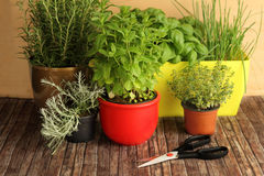 Herbs and scissors Royalty Free Stock Photography