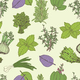 Herbs seamless pattern Stock Images