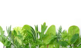 Herbs for seasoning on the edge of the image Royalty Free Stock Photography