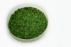 Parsley herb in a glass dish on white background. royalty free stock image