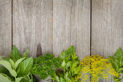 Herbs selection Stock Photography