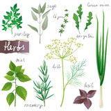 Herbs set Royalty Free Stock Photography