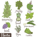 Herbs set Royalty Free Stock Photo
