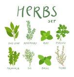 Herbs vector illustration