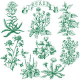 Herbs set. The set of medicinal plants. Hand drawn sketch of clover, yarrow, stinging nettle, ribwort, oxalis, calendula, chamomile, dandelion and banner with Stock Photos