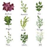 Herbs set. Set of nine vector herbs. Herbs set. Vector illustration vector illustration