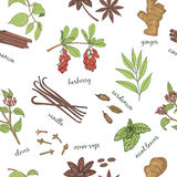 Herbs set seamless pattern. . Stock Images