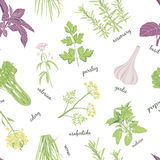 Herbs set seamless pattern. . Stock Image