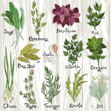 Herbs set. Set of vector herbs and spices on the wooden surface. Herbs set. Vector illustration stock illustration