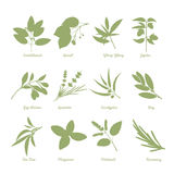Herbs silhouettes Royalty Free Stock Photo