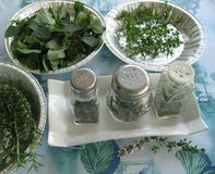 Drying the herbs. Herbs sitting in the sun for sorting and drying Royalty Free Stock Photo