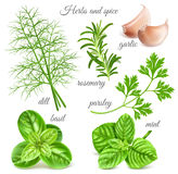 Herbs and spice. Big herbs and spice collection. Vector illustration Royalty Free Stock Photos