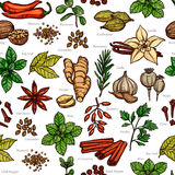 Herbs And Spice Color Sketch Pattern Royalty Free Stock Images