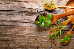 Herbs and spice Stock Photography