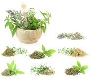 Herbs and spices. Collection on white background stock photo