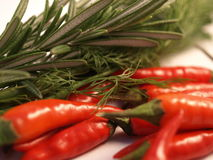 Herbs and Spices. Rosemary and Dill with Bird Eye Chillies on a white background stock photo