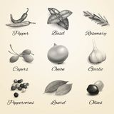 Herbs and spices black and white set Royalty Free Stock Images