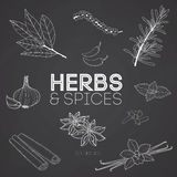 Herbs and spices on blackboard Stock Image