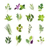 Collection of most common herbs and spices Royalty Free Stock Photo