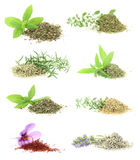 Herbs and spices collection. On white background stock images