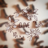 Herbs and Spices Collection - Clove Stock Image