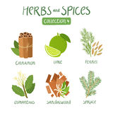 Herbs and spices collection 4 Royalty Free Stock Photos