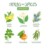Herbs and spices collection 1. For essential oils, ayurvedic medicine Royalty Free Stock Images