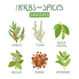 Herbs and spices collection 3 Stock Photography