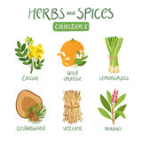 Herbs and spices collection 5 Royalty Free Stock Photo