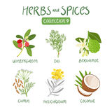 Herbs and spices collection 9 Royalty Free Stock Photo