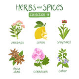Herbs and spices collection 11. For essential oils, ayurvedic medicine Royalty Free Stock Image