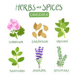 Herbs and spices collection 8. For essential oils, ayurvedic medicine Royalty Free Stock Image