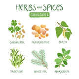 Herbs and spices collection 6 Royalty Free Stock Photo
