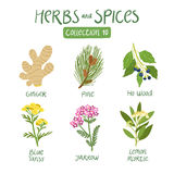 Herbs and spices collection 10. For essential oils, ayurvedic medicine Royalty Free Stock Image