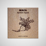 Herbs and Spices Collection - Maca Royalty Free Stock Photos