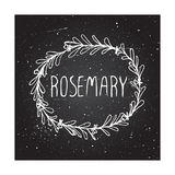 Herbs and Spices Collection - Rosemary Royalty Free Stock Photos