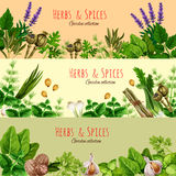 Herbs, spices and condiments cartoon banner set. Herbs, spices and condiments banner set. Fresh parsley, basil, dill, garlic, green onion, thyme and nutmeg Royalty Free Stock Photography