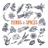 Herbs and Spices condiments 1. Herbs and Spices condiments. Vector hand drawn icons vector illustration