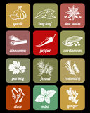 Herbs and spices, cook culinary ingredients vector icons stock illustration