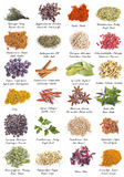 Herbs and spices for cooking Royalty Free Stock Photos