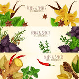 Herbs, spices culinary ingredients vector banners Stock Photography