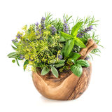 Herbs and spices dill, rosemary, basil, mint, sage, lavender. He Royalty Free Stock Photos