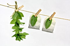 Herbs and spices drying Stock Photos