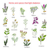 Herbs and spices that fight against diabetes Royalty Free Stock Photography