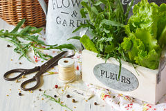 Herbs and spices. Fresh herbs and aromatic spices on an old wooden board stock photography