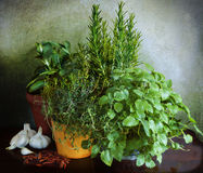 Herbs and spices, fresh and dry Royalty Free Stock Images