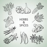 Herbs and spices Stock Photography