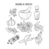 Herbs And Spices  Hand Drawn Realistic Sketches Stock Photography